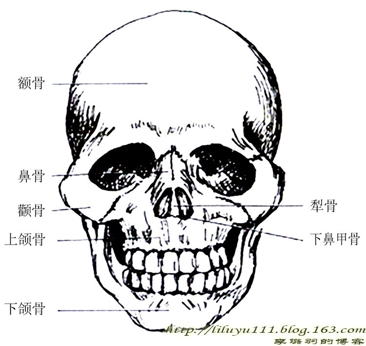 手绘骨骼妆